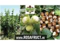 alun-pentru-plantatii-inflorescente-rezistente-la-ger-small-0