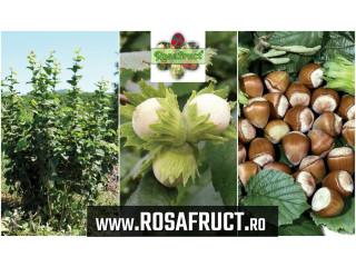 Alun pentru plantații - inflorescențe rezistente la ger