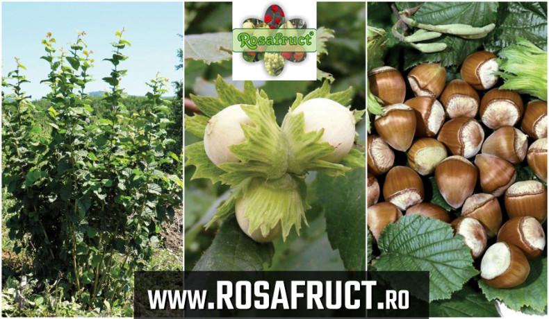 alun-pentru-plantatii-inflorescente-rezistente-la-ger-big-0