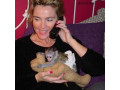 maimuta-minunata-de-capucini-pentru-adoptia-de-craciun-small-0