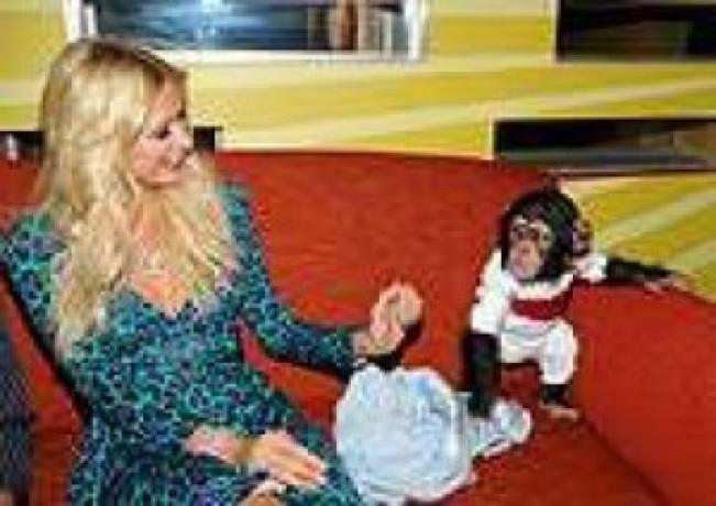 cimpanzeu-uimitor-disponibil-pentru-adoptare-big-0