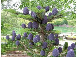 Plante ornamentale Oradea